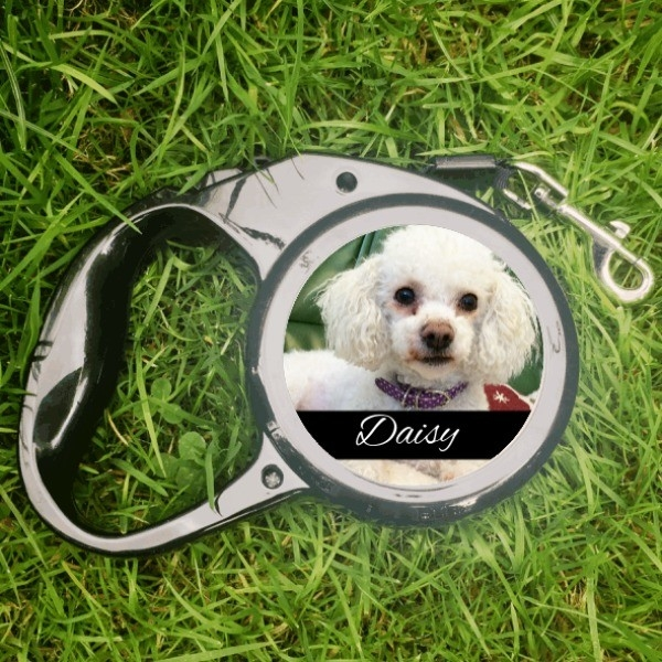 Small Dog Leads