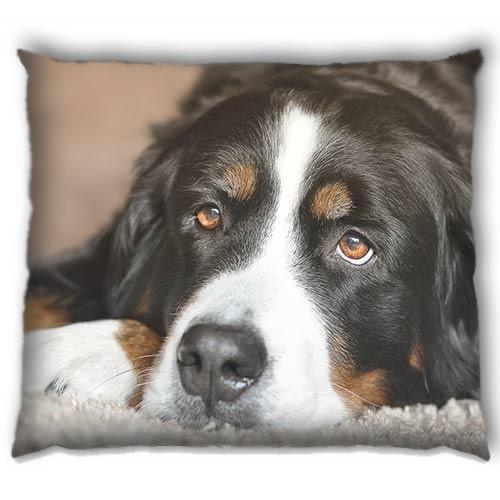 Pet Bed Large